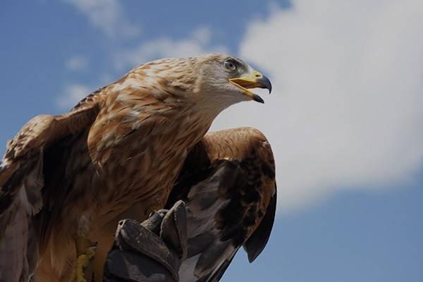 6.6公里鹰眼观测